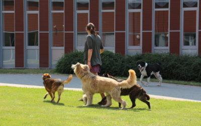 Kit követnek szívesebben a kutyák?