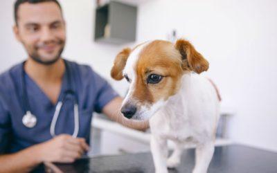 A kutya-gazda kapcsolat és egészségi állapot összefüggései – kérdőív állatorvosok, kutyakozmetikusok és asszisztenseik részére