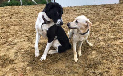 Kérdőív a kutyák társas szokásairól