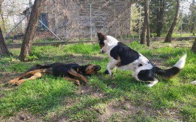 Együttélő kutyák szociális dinamikája